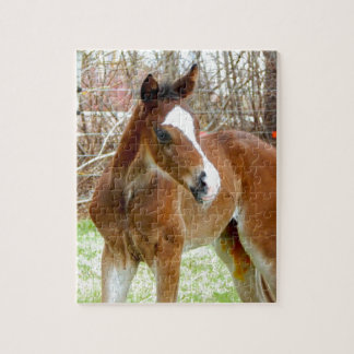 2CUTE HORSE FOAL BABY PONY JIGSAW PUZZLE
