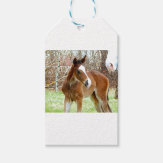 2CUTE HORSE FOAL BABY PONY PACK OF GIFT TAGS