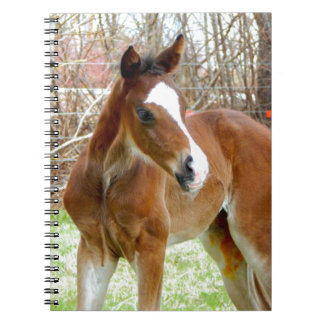 2CUTE HORSE FOAL BABY PONY SPIRAL NOTEBOOK