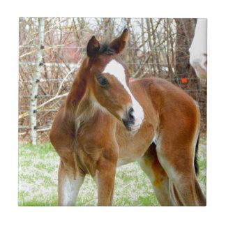 2CUTE HORSE FOAL BABY PONY TILE