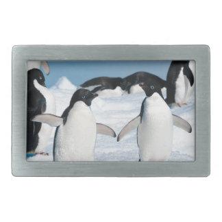 2Miscellaneous - Penguins & Ice Two Rectangular Belt Buckle