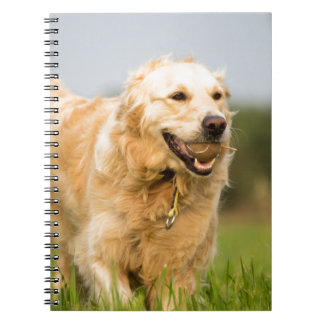 34520685_xxl notebooks