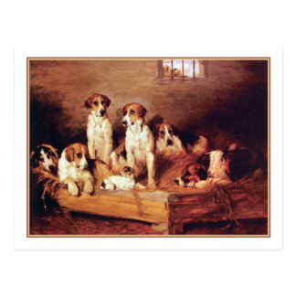 35  Foxhounds and Terriers Postcard