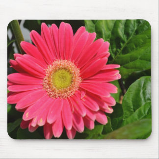 365flower Gerbera Daisies Mouse Pad