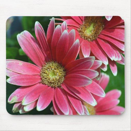 365flower Gerbera Daisies Mousepad
