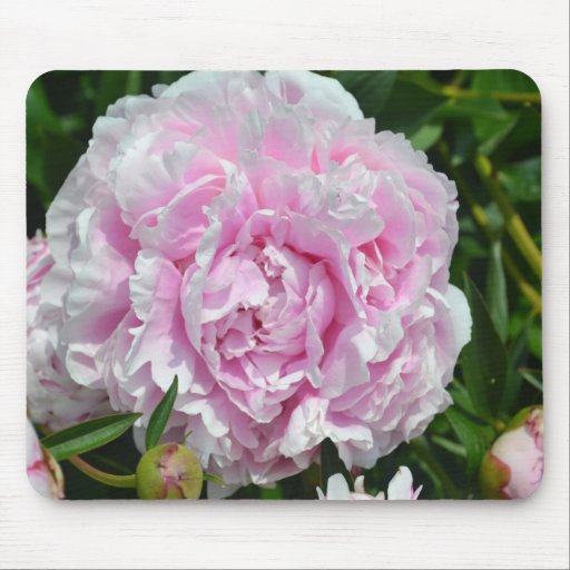 365Flowers Mousepads