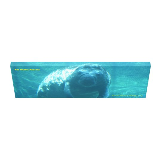 36x12x1.5 Gentle Manatee Wrapped Canvas Photo