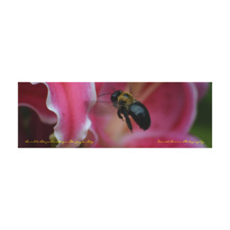 36x12x1.5 Wrapped Canvas Bee Pollination Photo
