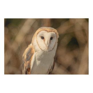 36x24 Barn Owl Wood Print