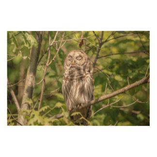 36x24 Sleepy Barred Owl Wood Wall Decor