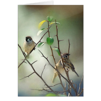 3-Birds Card