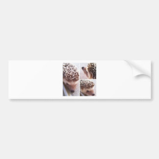 3 Close-ups, Spike Bumper Sticker