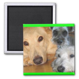 3 doggies green frame Magnet