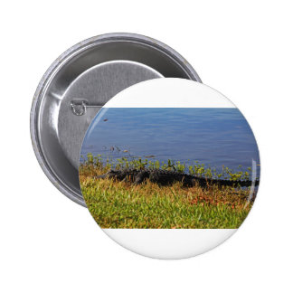 3 Gator in the Preserve 2 Inch Round Button