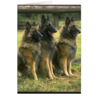 3-German Shepherds Card
