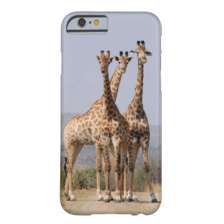 3 giraffes barely there iPhone 6 case
