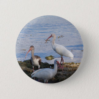 3 Ibis on the shore of Florida Bay 2 Inch Round Button
