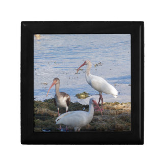 3 Ibis on the shore of Florida Bay Gift Box
