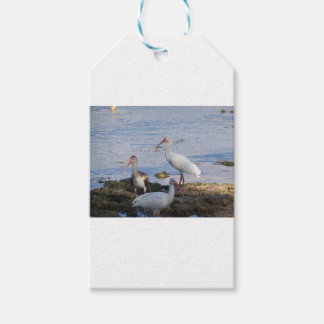 3 Ibis on the shore of Florida Bay Gift Tags