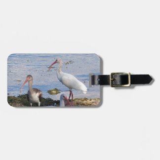 3 Ibis on the shore of Florida Bay Luggage Tag