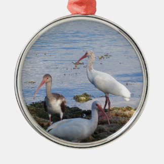 3 Ibis on the shore of Florida Bay Metal Ornament