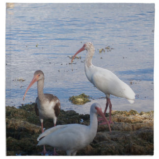 3 Ibis on the shore of Florida Bay Napkin
