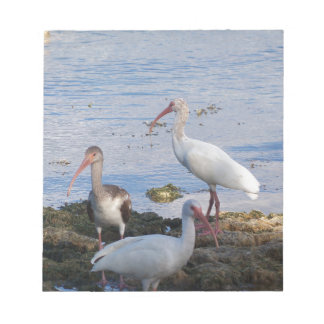 3 Ibis on the shore of Florida Bay Notepad