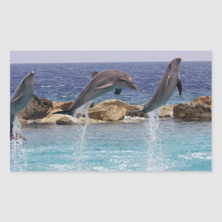 3 jumping dolphins sticker