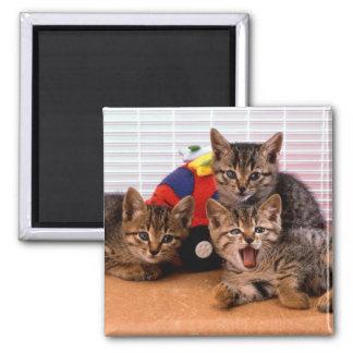 3 Kitties Magnet