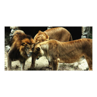3 Lions Pushing their Heads Together Personalized Photo Card