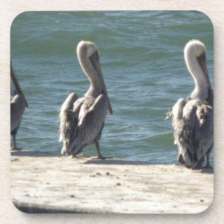 3 Pelicans Coaster