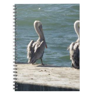 3 Pelicans Notebooks