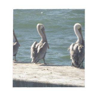 3 Pelicans Notepad