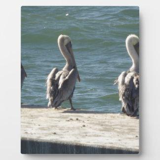 3 Pelicans Plaque