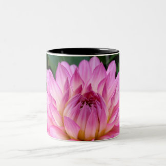 3 Pink Dahlia Burst Two-Tone Coffee Mug