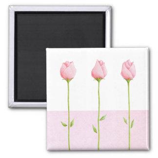 3 Pink Rosebuds Magnet