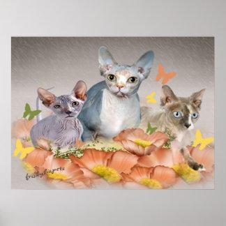 3 sphynx kittens cards poster