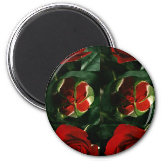 3 stages of ROSE Flower : Great HAPPY Celebrations 2 Inch Round Magnet