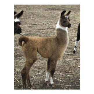3 stooges, Llama style Custom Letterhead