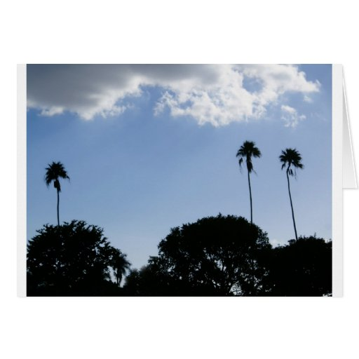 3 Tall Palms Greeting Cards