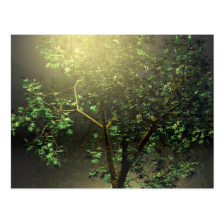 3D Japanese Maple Tree Postcard