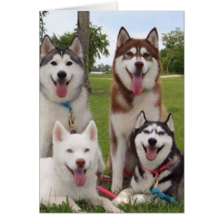 **40TH** BIRTHDAY HUMOR FROM SIBERIAN HUSKEY GROUP CARD