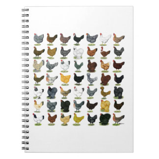 49 Chicken Hens Notebook