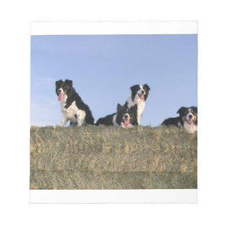 4 border collies notepad