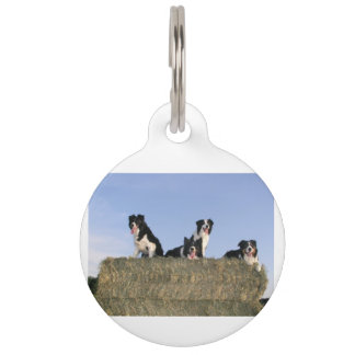 4 border collies pet name tag