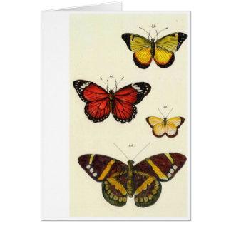 4 butterflies card