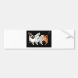 4 cats bumper sticker
