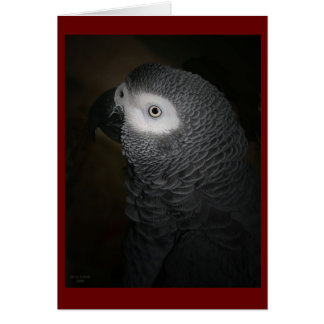 4-GREY PARROT GREETING CARDS