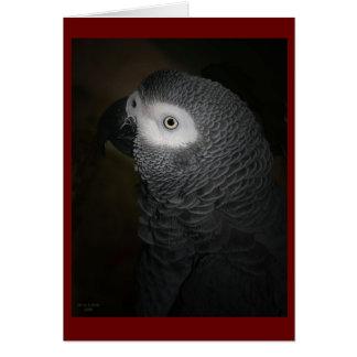 4-GREY PARROT CARD