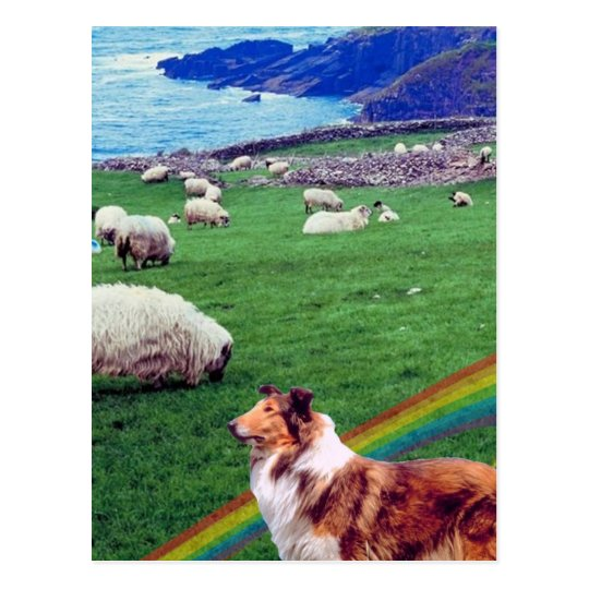 4.  Ireland Coast,  Collie & Flock of Sheep #2 Postcard